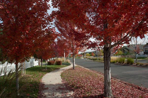 Landscaping at Senior Living Apartments in Denver, CO